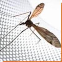 Защита от насекомых с помощью москитной сетки
